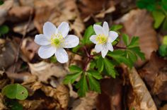 wald°sinnen: Schul°Wald Nature, Plants, Woodland Forest, School, Naturaleza, Plant, Natural, Planting, Scenery