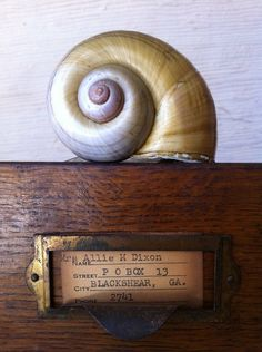 Nautilus on vintage drawer