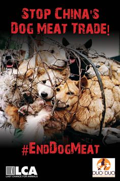 sign Now to Stop the Yulin Dog Meat Festival! I HAVE BEEN THROUGH SO MANY OF THESE PICS, THEY ARE ARE CRUEL ND DISGUSTING AND SO STRANGE THE MOST OF THE PHOTOS DO NOT SHOW THESE BASTARDS FACES.