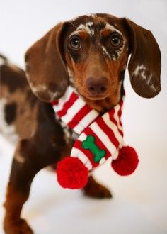 Will you be wearing your christmas scarf this weekend too? :)