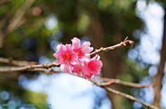 jardim zoológico jardim botânico belo horizonte cerejeira