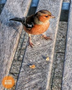 A Chaffinch came to lunch