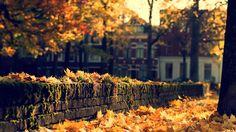 Autumn House[19201080] via Classy Bro