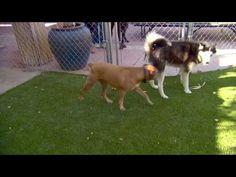 Cesar Millan Hyperactive dogs 2 dio - YouTube