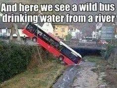 wild life!!
