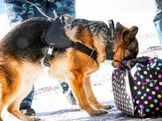 Служебная собака предотвратила незаконный вывоз 800 тысяч рублей из России