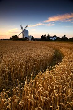 Summer at Mill - The Mill at Aythorpe Roding on a beautiful summers evening. Photography by Chris Shepherd