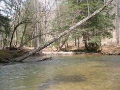 Salmon Creek Tionesta, PA