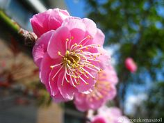 梅の花咲いた(^^) もうすぐ・・・春