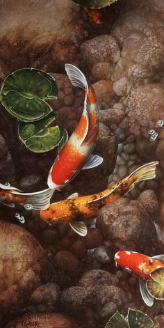 Terry Gilecki is a highly aclaimed painter of the beautiful Koi fish and the surreal world they live in. His paintings and prints are collected world wide. Koi Fish Pond, Fish Ponds, Koi Art, Fish Art, Tattoo Pez, Koi Painting, Fish Paintings, Japanese Koi, Exotic Fish