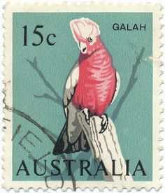 Australian,1966. Galah (Eolophus roseicapilla), also known as the rose-breasted cockatoo, galah cockatoo, roseate cockatoo or pink and grey, is one of the most common and widespread cockatoos, and it can be found in open country in almost all parts of mainland Australia.