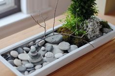 DIY tabletop zen garden ideas main elements mini rock garden moss bonsai tree