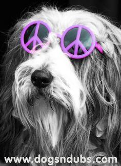 Peace man! Cool Beardie!!!