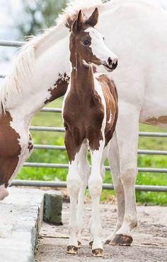 Absolutely breathtaking! via Solaris Sport Horses