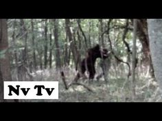 INCREDIBLE!! DRONE CAM FILMS REAL BIGFOOT SIGHTING!! CAUGHT ON VIDEO!! - Ohio, USA (2012) - HD - YouTube