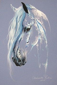 Fresian horse by Paulina Stasikowska