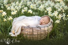 There is just something magical about seeing a newborn baby in nature. Outdoor Baby Photos, Outdoor Shoot, Outdoor Newborn Photography, Real Life Baby Dolls, Newborn Pictures, Newborn Pics, Photographing Babies, Newborn Session, Bay Area