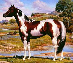 Orren Mixer painting of Paint horse for APHA (American Paint Horse Association) American Paint Horse, American Quarter Horse, All The Pretty Horses, Beautiful Horses, Animals Beautiful, Quarter Horses, Caballo Tobiano, Cheval Pie, All Horse Breeds