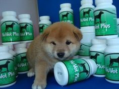 The main benefit of nuvet supplements is that it can be given to the dogs of all ages. It contains natural ingredients, no fillers, no artificial flavors, or additives.