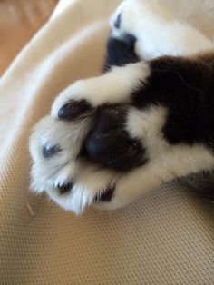 Cute paw <3