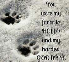 You were my favorite HELLO and my hardest GOODBYE … cat, pet loss, grieving Souvenir Animal, I Love Dogs, Puppy Love, Pet Loss Grief, Loss Of Dog, Dog Poems, Pet Remembrance, Plus Belle Citation, You Are My Favorite