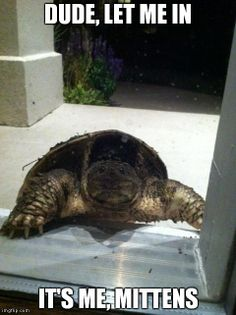 If I found this at my doorstep I would never sleep again and most likely live in a bubble.
