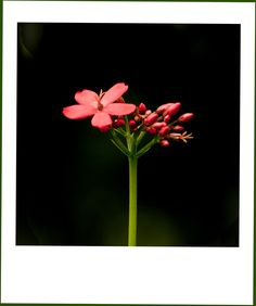 Red and green (3) by Samrat  Mukhopadhyay
