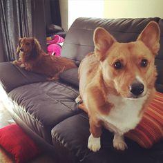 nigahiga's dogs: Marlie and Teddy