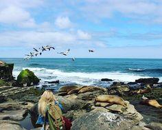 Dieser Moment, wenn du alles auf einmal festhalten willst und von der Schönheit des Lebens überrannt wirst. 💙 _________________________ #unreal #nature #beautiful #place #placetobe #lajolla #sandiego #pelicans #sealions #sea #ocean #pacific #blondie #ontour #happyme #goodlife #vacation #blue #dream #life #vida #blonde #girl #german #lajollalocals #sandiegoconnection #sdlocals - posted by Jennifer  https://www.instagram.com/jen_32_. See more post on La Jolla at http://LaJollaLocals.com