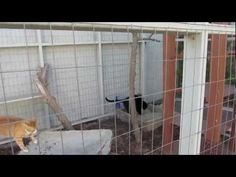 ▶ Our Cat Enclosure and Cat Run (DIY Pet Project) - YouTube