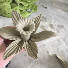 5 daffodil petals