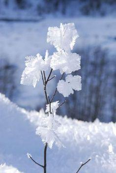 Blossom Garden, Winter Illustration, I Love Winter, Winter Wallpaper, Winter Magic, Night Aesthetic, Winter Scenery, Winter Beauty, Winter Photography