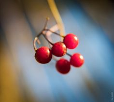 Berries in the sun - null