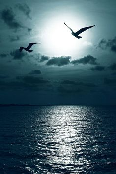 Deniz ve Martılar