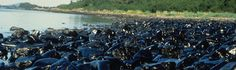 The Exxon Valdez Spill Is Still Making Fish Suffer 26 Years Later