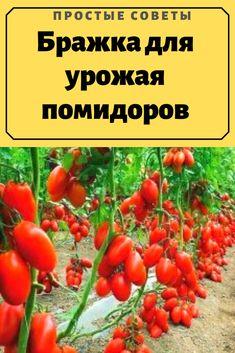 Garden Art, Garden Plants, Small Farm, Vegetables, Outdoor, Food, Banana, Tomato Tree, How To Plant Strawberries
