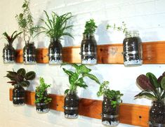DIY VIDEO: Model Summer Rayne Oakes Shows You How to Make a Mason Jar Herb Garden for Your Kitchen Wall