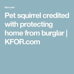Pet squirrel credite