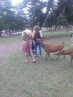 #nara #narapark #deer #奈良 #奈良公園 #鹿 さん おねだり中