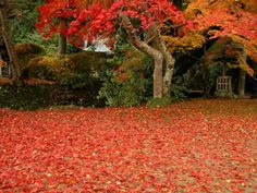 가을의 붉은 단풍잎 마당