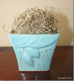 Make Your Own Spanish Moss Ball for Free - Sweet Pea