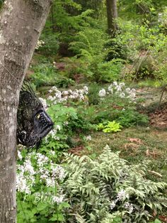 Along the dry riverbed in the woodland #garden.  A wire art fish is on the tree :-) K Blevons  #BirminghamAl