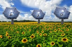 Sunflower-Shaped Dish Makes Power, Fresh Water : Discovery News