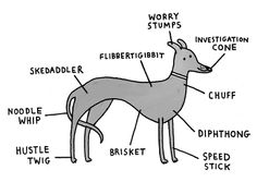 Breed-Specific Canine Anatomy - Greyhound