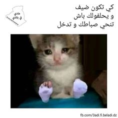 Funny Photo Memes, Funny Picture Jokes, Some Funny Jokes, Funny Video Memes, Funny Photos, Funny Stuff, Arabic Memes, Arabic Funny, Funny Arabic Quotes