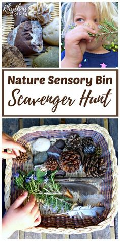 Nature scavenger hunts are a great way to get the kids outside having fun. Invite your children to go on a scavenger hunt to find natural materials to make a nature sensory bin. Learn how Nature Activities, Indoor Activities For Kids, Sensory Activities, Infant Activities, Summer Activities, Therapy Activities, Family Activities, Outdoor Activities, Nature Scavenger Hunts