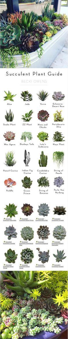 #Succulent #Garden #Plant Identifications #Guide – #beautifulflowerslandscapes