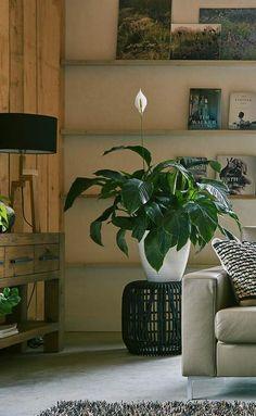 De open structuur zorgt ervoor dat de woon- of slaapkamer ruimtelijk blijft. De zwarte kleur maakt dit item nog net iets specialer. Het is dan ook echt een musthave in ieder interieur. Wat ook handig is: Side is niet alleen als krukje, maar ook als bijzettafel én als nachtkastje te gebruiken.