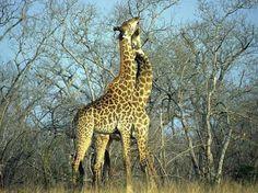 Ngala Game Reserve, Kruger National Park, South Africa