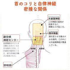 笑顔をリフォームする@健康小顔職人さんはInstagramを利用しています:「. 『首と自律神経』は切っても切れない関係です。 . 首のコリが楽になると全身が楽になるのは、まさに自律神経が整った証拠です。 . 1枚目の画像にある様に、首の上半分には自律神経のバランスを整えるポイントがあるため、そこが凝っているとなかなか疲れが取れません。 .…」 Qigong, Healthy Teeth, Healthy Life, Health Diet, Health Fitness, Mental Health, Calcium Benefits, M Beauty, Body Stretches